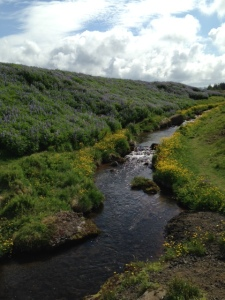 River running through open space with flowers