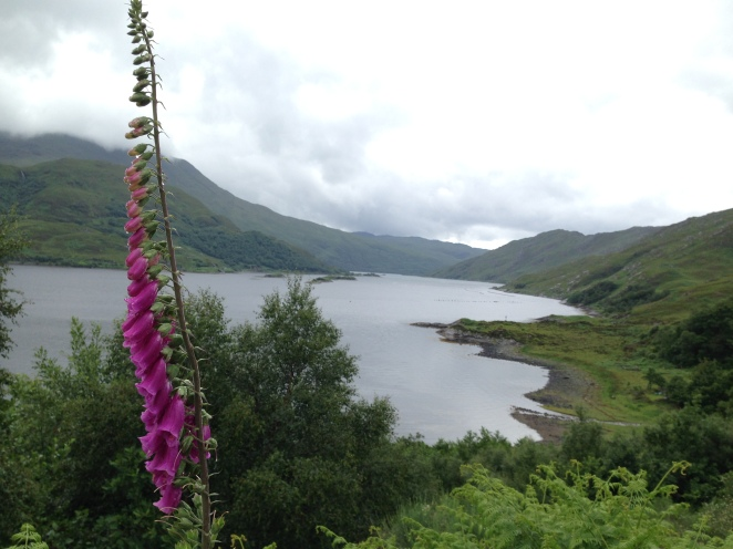 a loch with flowers growing